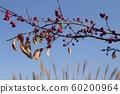 Fall scenery 60200964