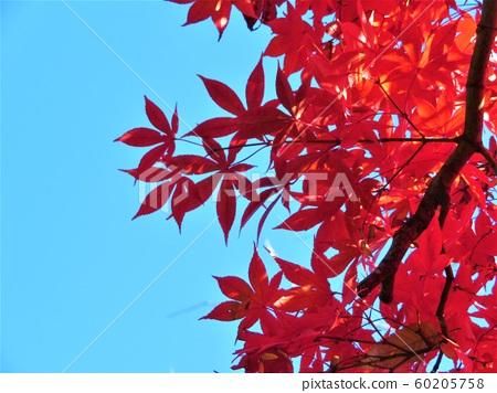 Autumn leaves in Horai Park, Denenchofu, Ota-ku, Tokyo