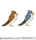 兩隻獵鷹側身看 60206011