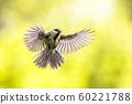 Bird in flight on bright green background 60221788