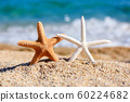 Beautiful sea stars on the beach 60224682