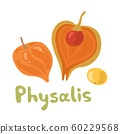 Cape physalis fruit icon, fruit with husk. Physalis alkekengi, bladder cherry, Japanese lantern, strawberry groundcherry, Chinese lantern or winter cherry. 60229568
