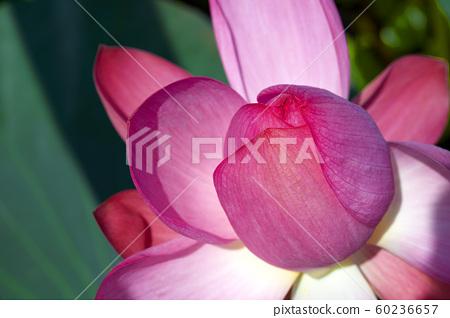 애월읍 하가리 연꽃마을, 제주도 60236657