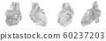 3d rendering illustration of heart 60237203