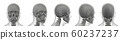 3d rendering illustration of skull bone 60237237