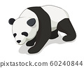 Isometric panda bear vector illustration with white background. 60240844