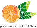 Vector orange, a hand-drawn illustration on a white background, a citrus fruit with green leaves icon 60242647