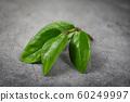 green leaf on the dark 60249997