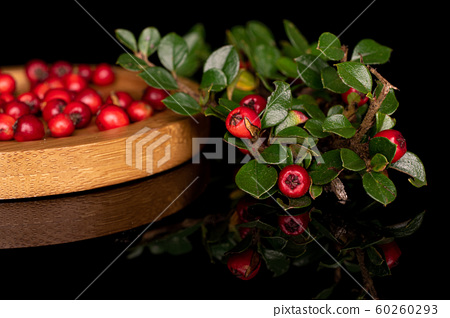 Wild red rowanberry isolated on black glass 60260293