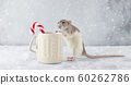 Rat with winter cup and candy cane 60262786