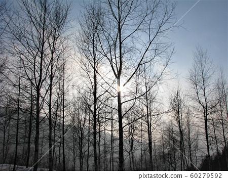함백산,겨울,눈,상고대,나무, 60279592
