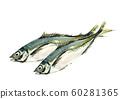 鯵 horse mackerel maji watercolor 60281365