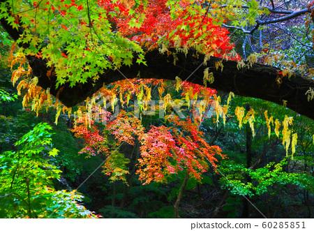 초록의 가을색 60285851