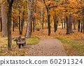 Autumn park path with benches and oak foliage 60291324