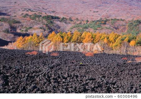 타 주행 용암류 60308496