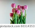 charming pink flowers peony tulips 60314353