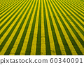 Beautiful field background with blooming rapeseed. View from above 60340091