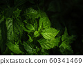 Tropical Green Leaf with the Morning Light 60341469