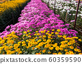 Thailand, Agricultural Field, Agriculture, 60359590