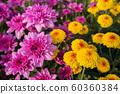 Bouquet, Flower, Plant, Thailand, Agricultural 60360384