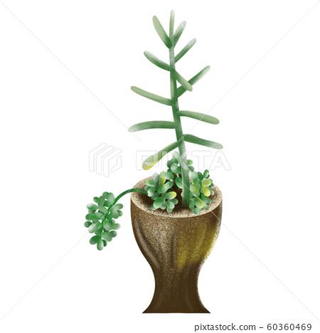 多汁植物 60360469
