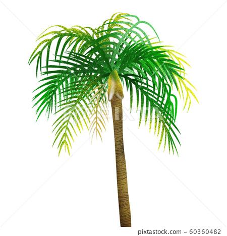 棕櫚樹 60360482