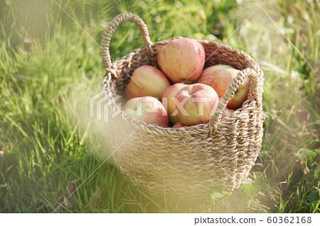 收穫蘋果草坪 60362168