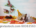 Adorable chihuahua dog wearing a New Year conical hat with maple leaves on festive background concept. 60363563