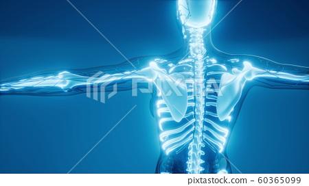 Transparent Human Body with Visible Bones 60365099