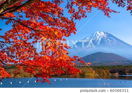 《山梨縣》富士山和秋葉,日本秋天 60366351