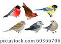 Wild Birds Collection, Titmouse, Bullfinch, Sparrow Vector Illustration 60366706