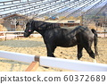 果川市賽馬場賽馬公園 60372689