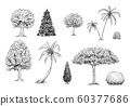 Set of Trees, Palm Trees and Bushes. Vector Hand Drawn Black and White Illustration 60377686