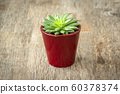 Potted succulent on the old wooden table 60378374