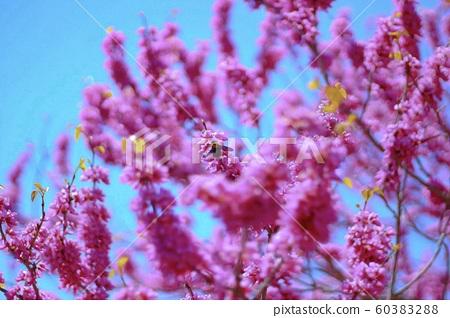 꽃과 벌레. 60383288