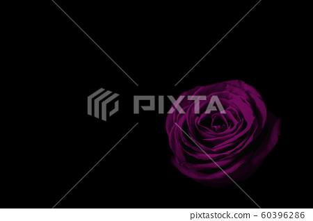 黑暗中的紫玫瑰 60396286