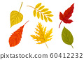 Autumn Leaves Collection, Colorful Bright Fall Foliage Vector Illustration 60412232