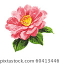camellia191210pix7 60413446