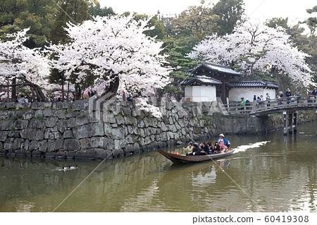 Wakayama Castle in full bloom 60419308