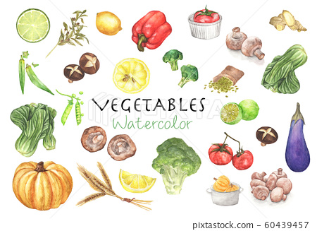 Watercolor painted collection of vegetables. 60439457