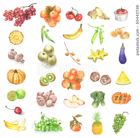 Watercolor painted collection of fresh fruits and vegetables. 60440596