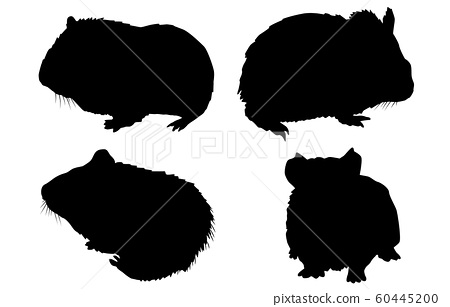Animal silhouette pet guinea pig 60445200