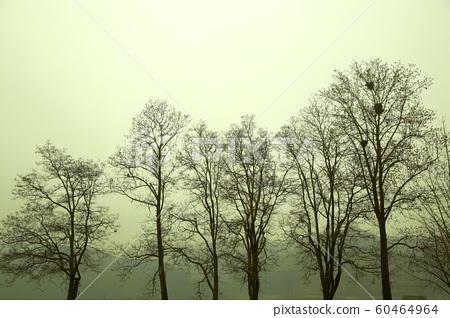 남이섬, 나무,새집,미세먼지, 60464964
