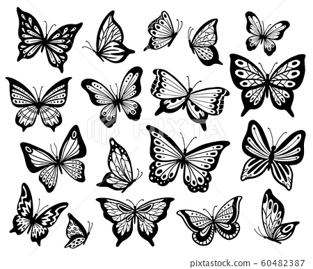 Drawing butterflies. Stencil butterfly, moth wings and flying insects isolated vector illustration set 60482387