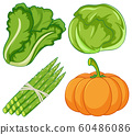 Four types of vegetables on white background 60486086