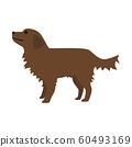 狗的插图。一只小型腊肠狗。 60493169