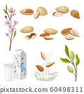 Almonds Plant and Nuts in Shell Vector Set 60498311