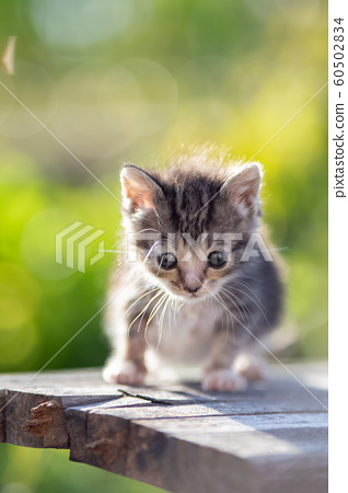 생후 3 개월의 고양이 60502834