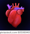 Red heart with orteria. Anatomically realistic organ. Vector illustration 60506940