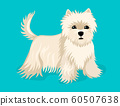 Little puppy, dog breed shi tzu stands. Vector illustration 60507638